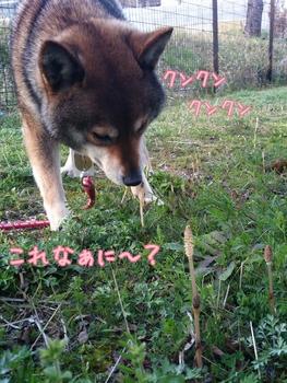 2014-04-10-16-44-57_deco.jpg