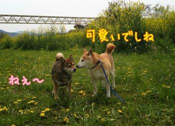2014-04-12-18-07-58_deco.jpg