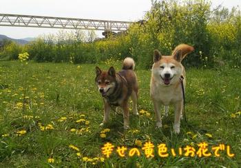 2014-04-12-18-32-06_deco.jpg