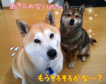 2014-04-16-13-41-16_deco.jpg