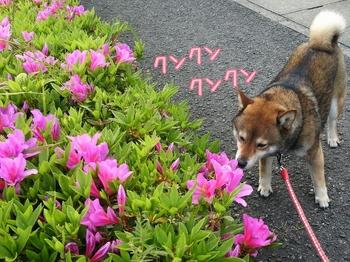 2014-04-26-21-24-29_deco.jpg