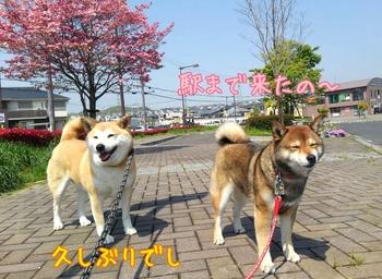2014-04-26-21-28-19_deco.jpg