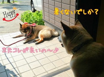 2014-07-02-11-26-44_deco.jpg