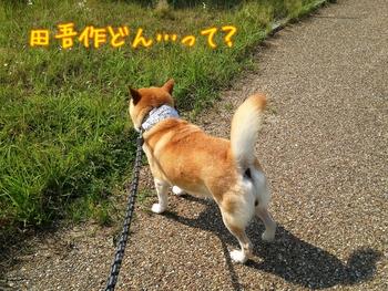 2014-07-02-11-45-46_deco.jpg