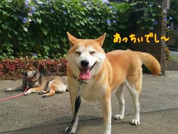 2014-09-17-11-14-57_deco.jpg