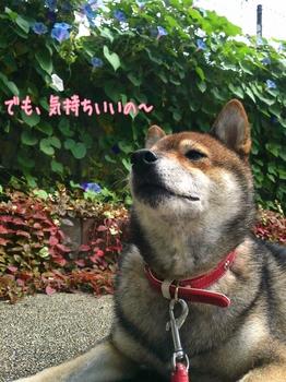 2014-09-17-11-17-21_deco.jpg